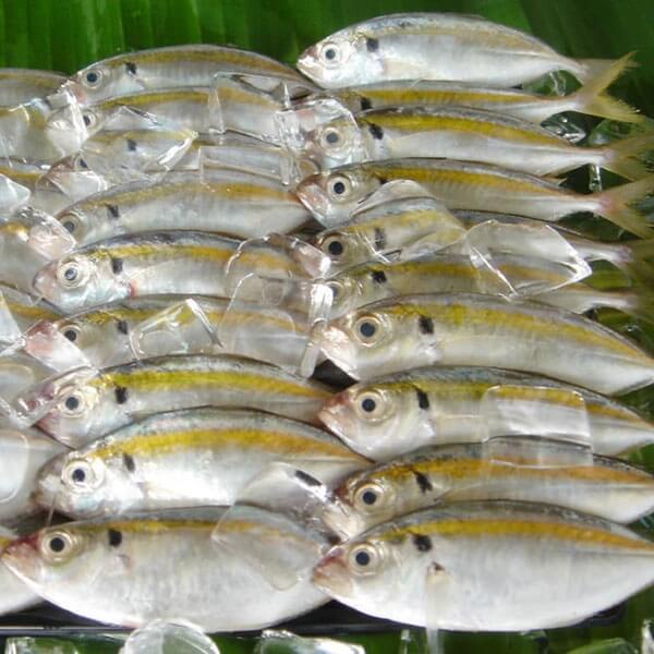 Cá chỉ vàng tẩm gia vị