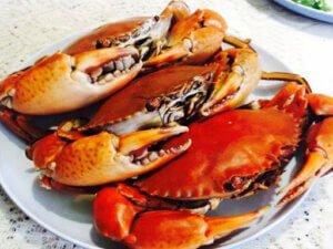 Cua gạch Cà mau - Vị biển miền trung chuyên cung cấp hải sản tươi sống, chất lượng