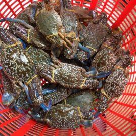 Ghẹ biển xanh tươi sống - vị biển miền trung